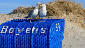 Strandkorb kaufen Amrum